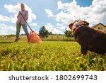 Woman Doing Garden Work Raking...