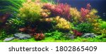 Colorful aquatic plants in...