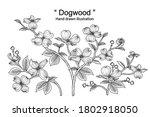 Sketch Floral Decorative Set....