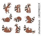 Cute Funny Raccoon Collection ...