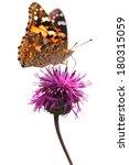Butterfly Species Vanessa...