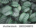 Top View Pattern Leaf Layers Of ...