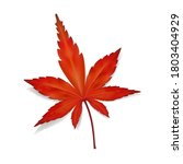 Fallen Leaf Of Japanese Maple...