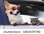 Fashionable And Funny Dog   An...