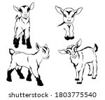 Set Of Small Goats. Collection...