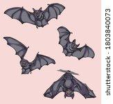 bat  bat in flight  in motion ... | Shutterstock .eps vector #1803840073