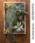 Assorted Air Plants Arranged On ...