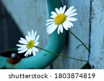 Two Daisies Pointing Out...