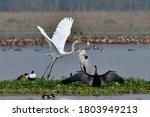 Five Different Bird Species In One Frame