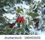 Snow And Ice Covered Holly Leaf ...