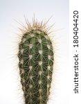 Cactus Plant On Gradient White...
