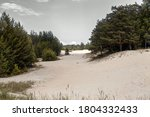 Sand Dunes And Pine Forest...