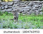 Feral Cat In The Summer