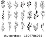 collection forest fern... | Shutterstock .eps vector #1804786093