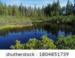 Old Sumava Forest National Par...