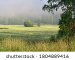 An Agricultural Meadow  Tall...