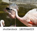 Birds Of Tracy Aviary At...