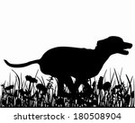 agility,background,black,canis,color,companion,dog,domestic,familiaris,flower,graphic,grass,grassland,green,herb