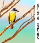 Yellow Kingfisher Bird On A...