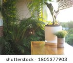 A Small Plant In The White Pot...