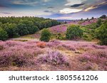 Landscape With Purple Blooming...