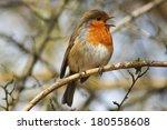robin | Shutterstock . vector #180558608