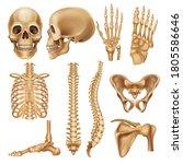 human bones. realistic skeleton ... | Shutterstock .eps vector #1805586646