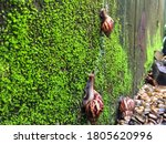 African Giant Snails Are Walke...