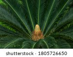 Closeup View Of Flower Of...