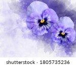 Close Up Of Purple Pansy...