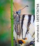 A Rare Species Of Butterflies...