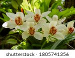 Tropical Flora. Cymbidium...