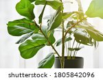 Artificial Plant  Closed Up Of...