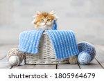 Little Striped Kitten Sitting...