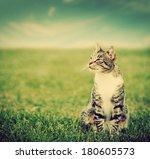 Cute Cat Sitting On Green...