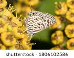 A Macro Image Of A Butterfly On ...
