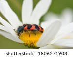 Macro Photograph Of An Isolated ...