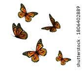 Flying Orange Butterflies....
