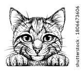 kitten. wall sticker. black and ...   Shutterstock .eps vector #1806673606