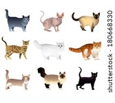popular purebred cats isolated... | Shutterstock .eps vector #180668330