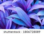 Natural Violet Leaves Tropical...