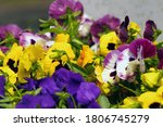 Popular Cultivated  Flowers In...