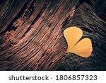 Yellow Ginkgo Biloba Leaf In...