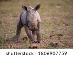 An Adorable Baby White Rhino...