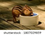 Chipmunk Eating Peanuts From A...