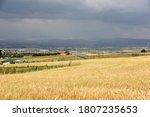 weat fields in village under sky   Shutterstock . vector #1807235653