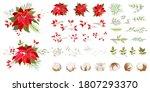 Red Poinsettia Vector Christmas ...