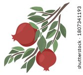 vector juicy pomegranate on a... | Shutterstock .eps vector #1807341193