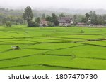 view of the rice fields in the... | Shutterstock . vector #1807470730