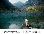 Dog At A Mountain Lake In...